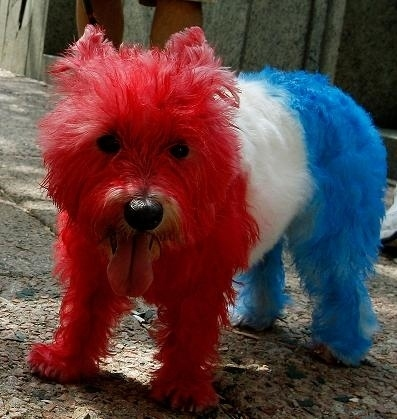 #4thofJuly, #dogs, #cute